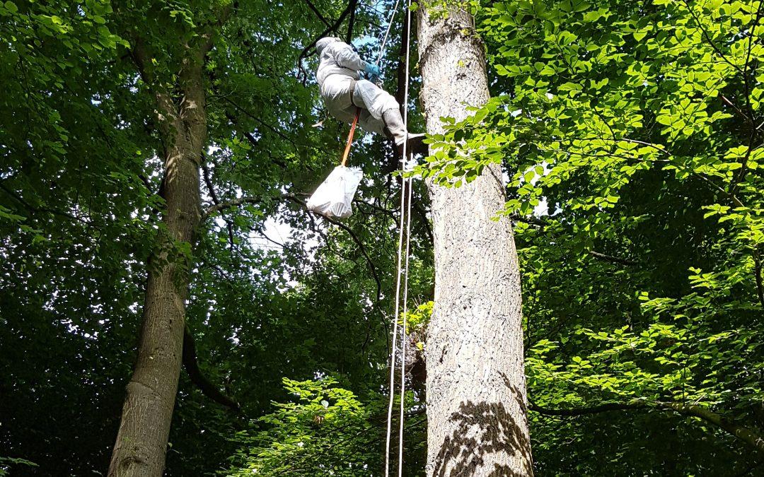 Waldkindergarten lernt mit Eichenprozessionspinner umzugehen