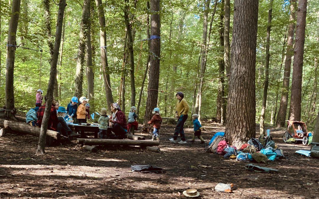 Willkommen im Wald – Eingewöhnung im Waldkindergarten